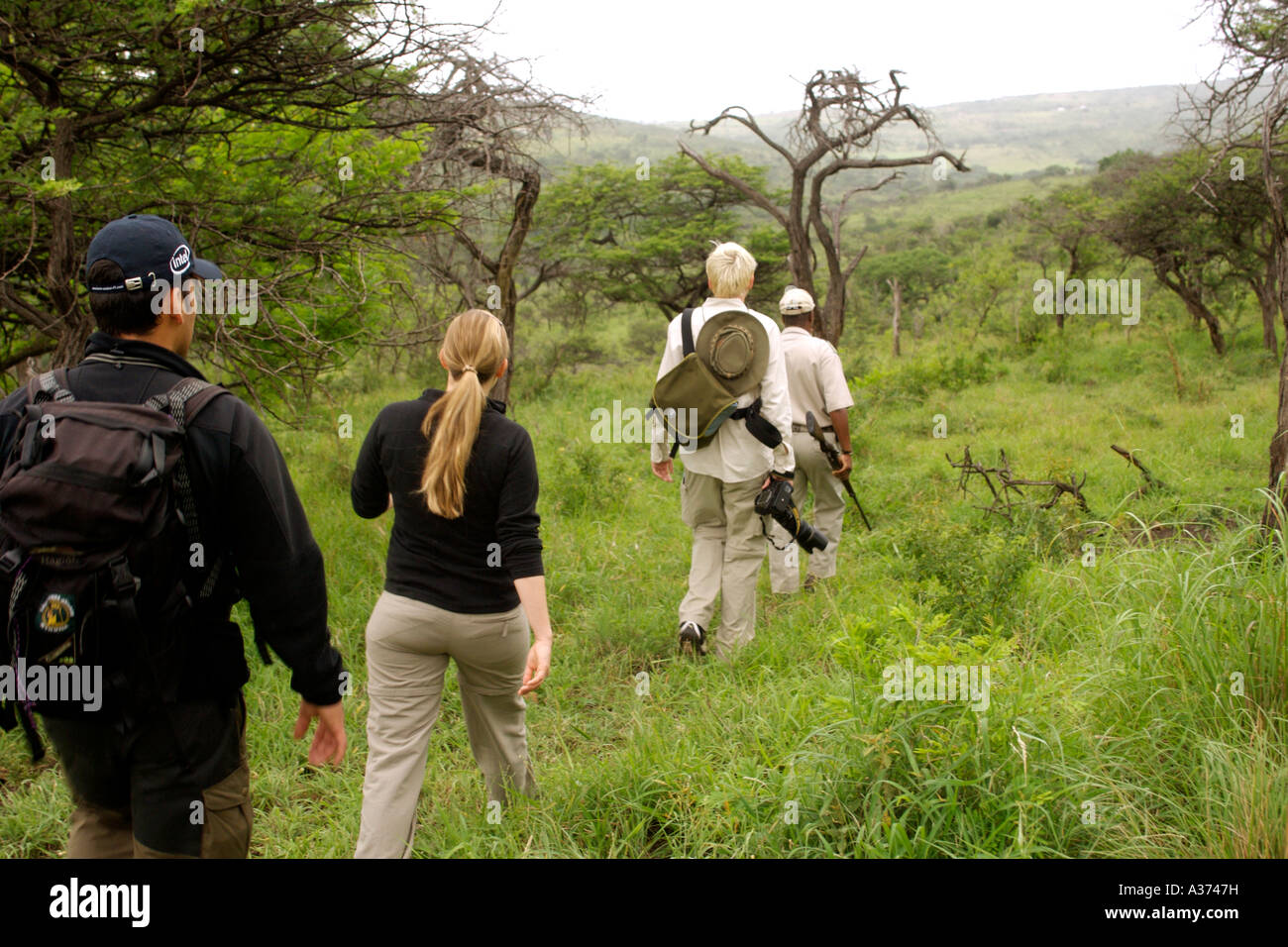 Elliot Qwabe, a bush guide since 1976, leading tourists on a game walk in the Umfolozi-Hluhluwe National Park in - Stock Image