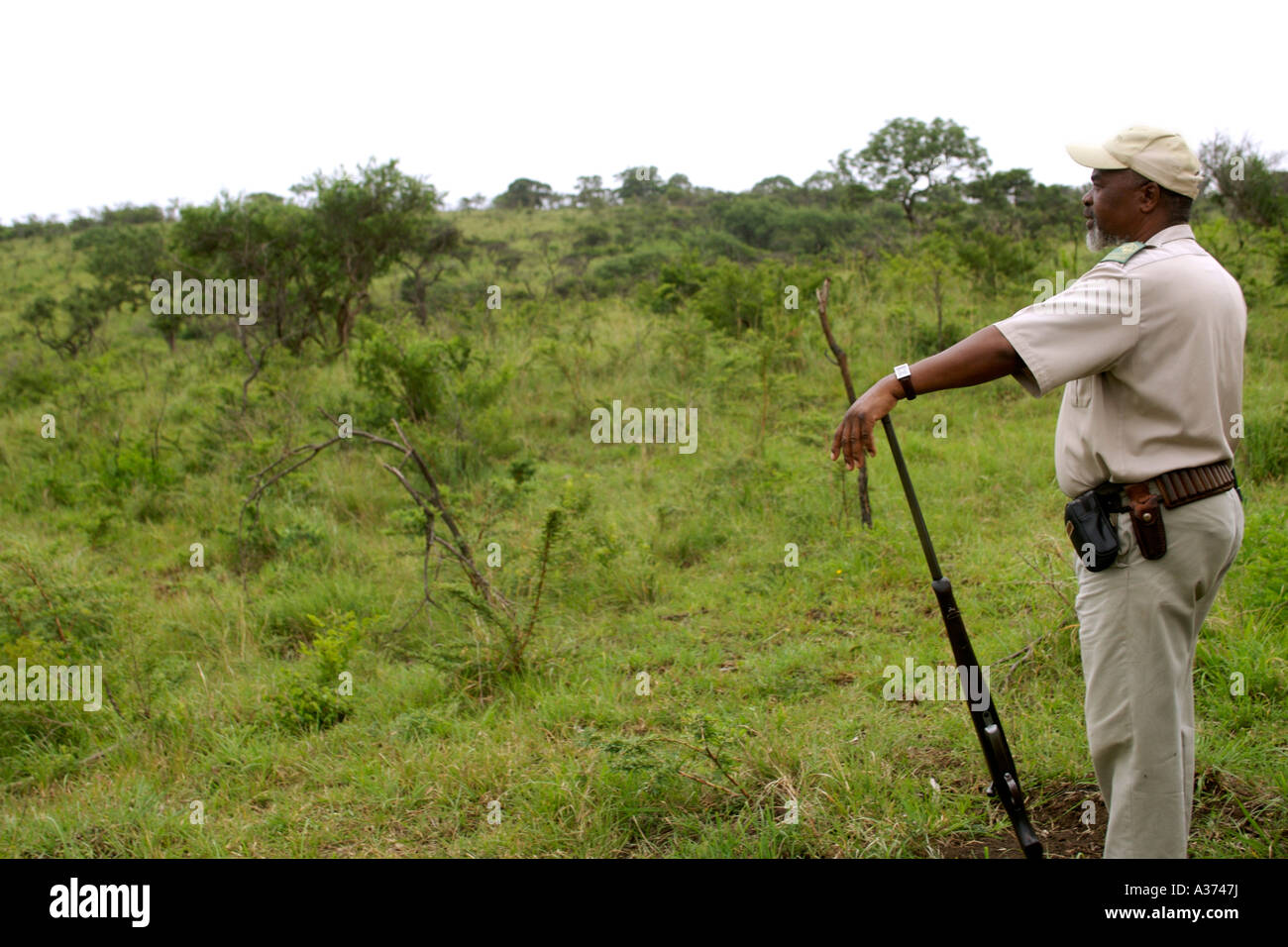 Game ranger Elliot Qwabe, a bush guide since 1976, on a guided game walk in Umfolozi-Hluhluwe National Park South - Stock Image