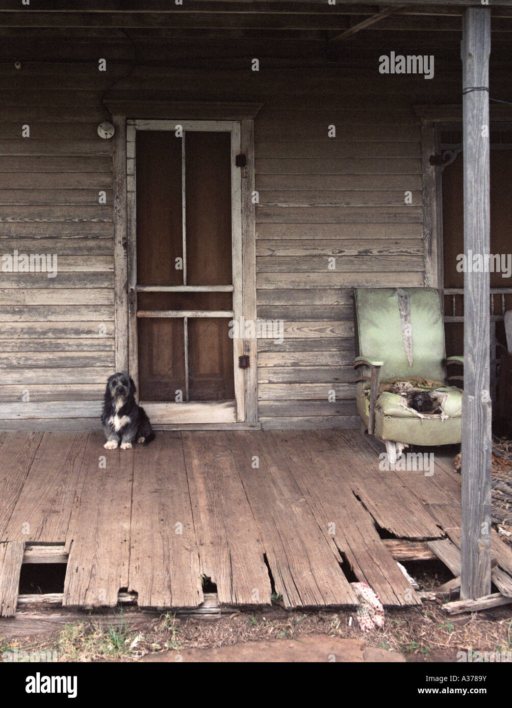Guard Dog At Front Door Of A Dilapidated Old House Stock Photo