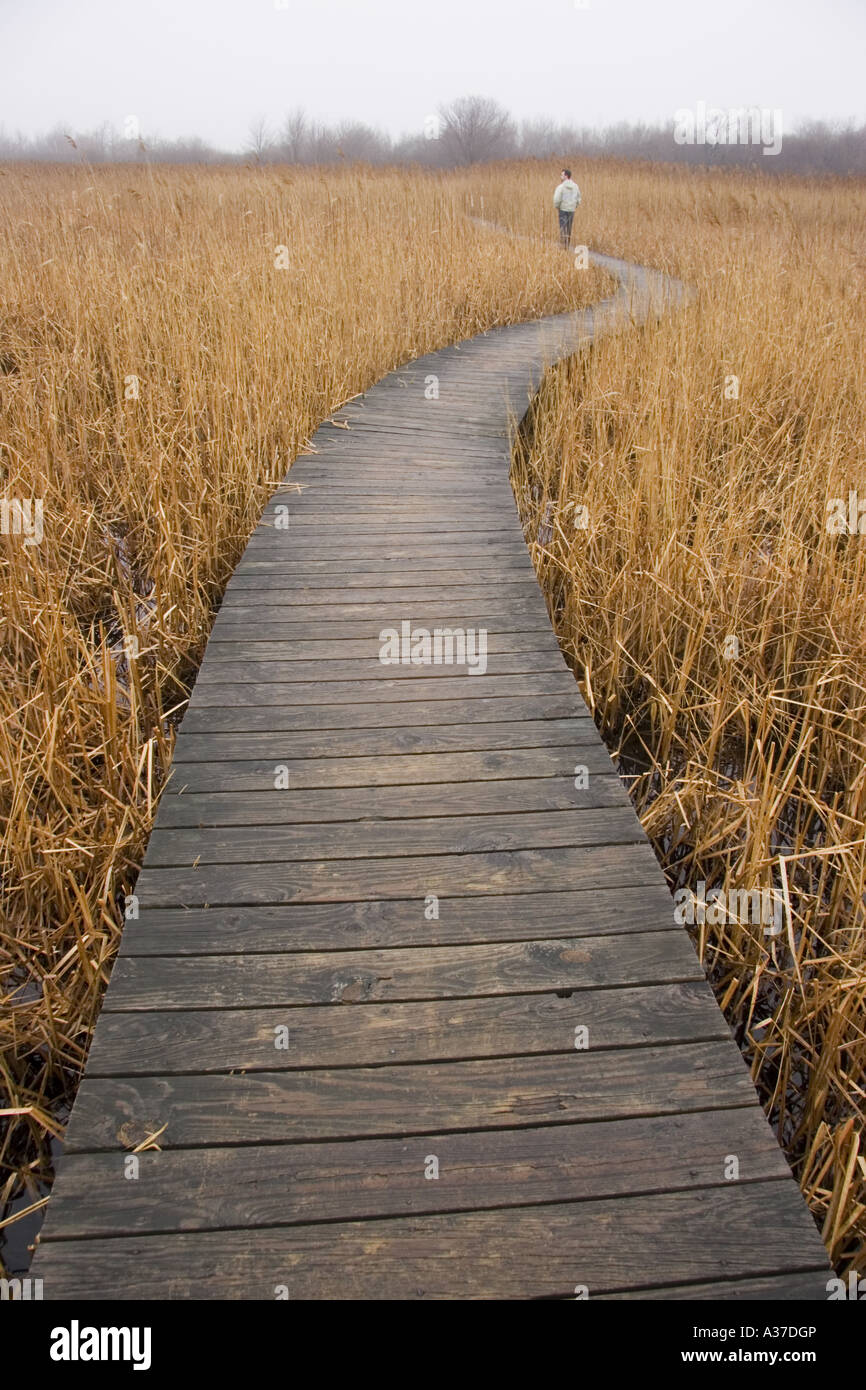 man standing on walkway in a field of fog thinking pathway into a misty depressing drab marsh - Stock Image