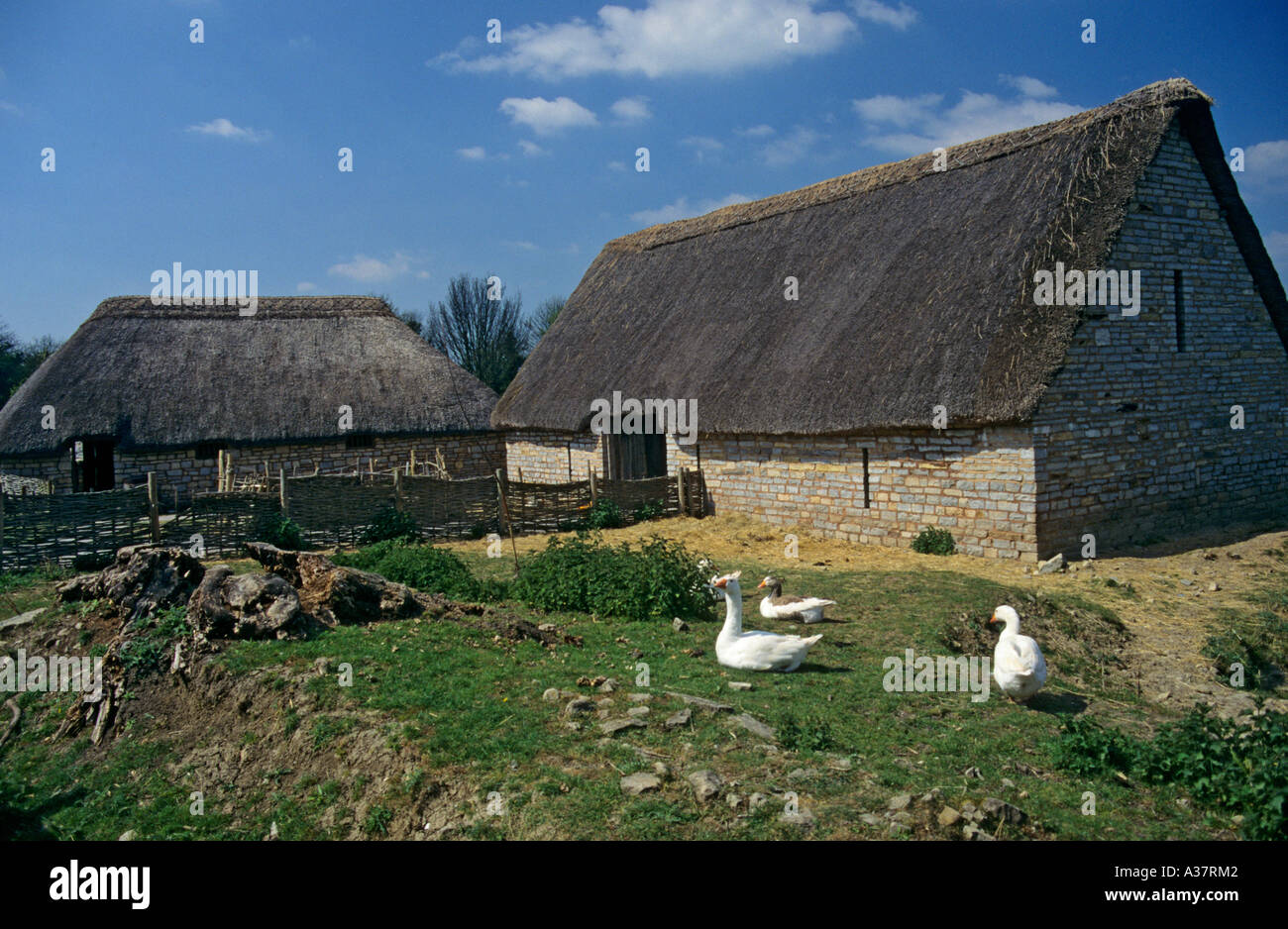 Geese Outside Tithe Barn And Pig Keeper Cottage Cosmeston Medieval Village Wales UK