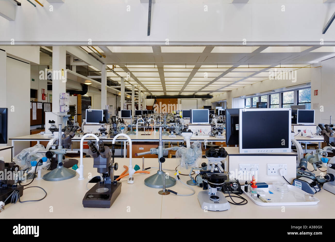 Laboratory at the Department of Zoology Oxford University - Stock Image