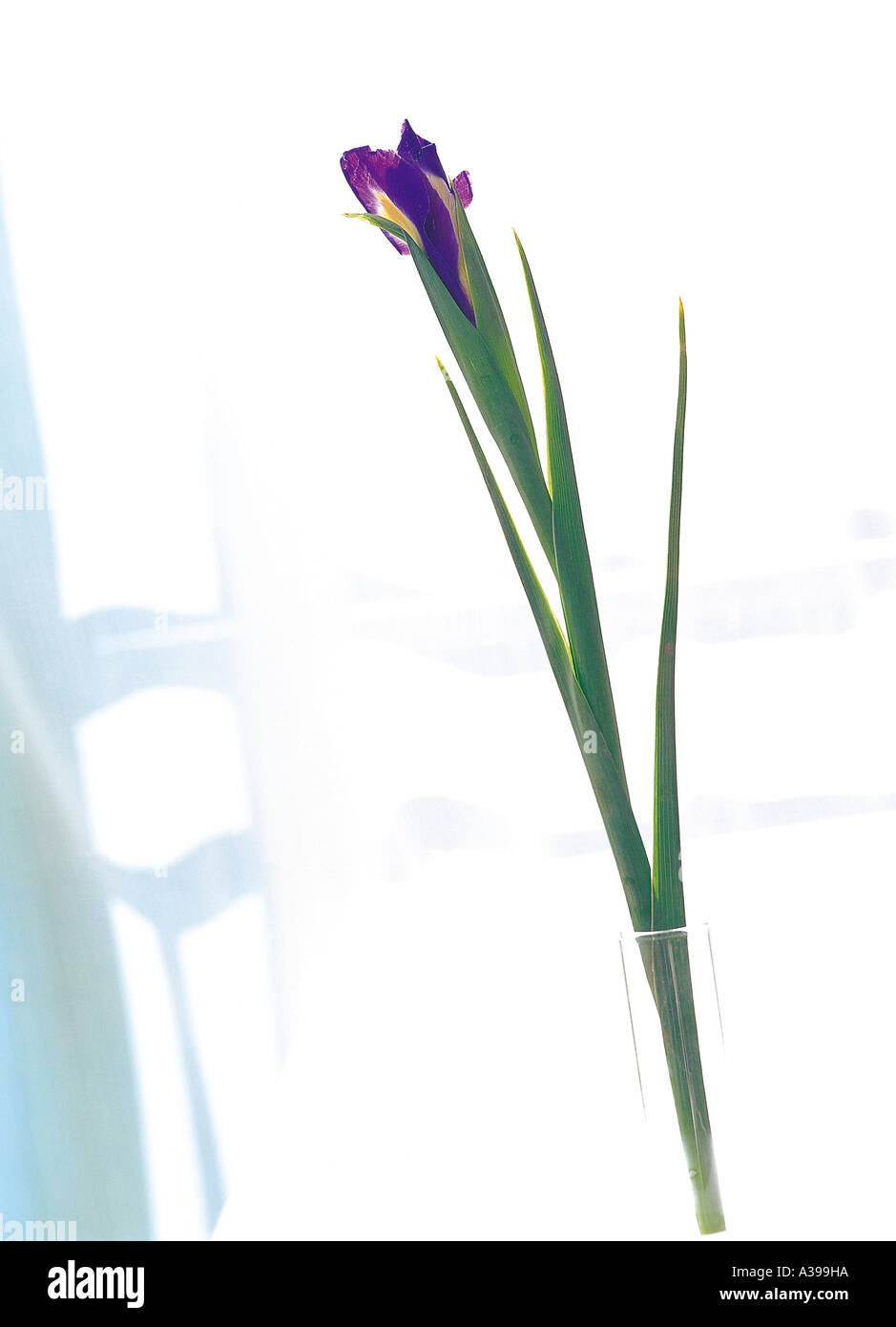 A flower is blooming from a stem in the skinny glass stock photo a flower is blooming from a stem in the skinny glass izmirmasajfo