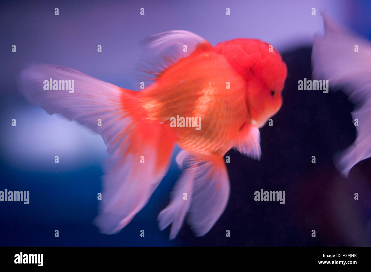 Tropical Fish Chatuchak Market Bangkok Stock Photos & Tropical Fish ...