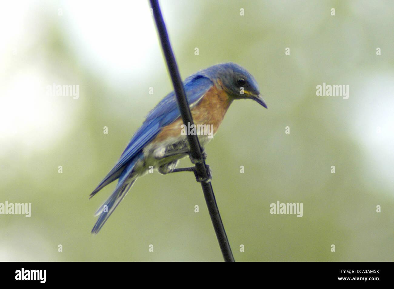 P18 Stock Photos & P18 Stock Images - Alamy