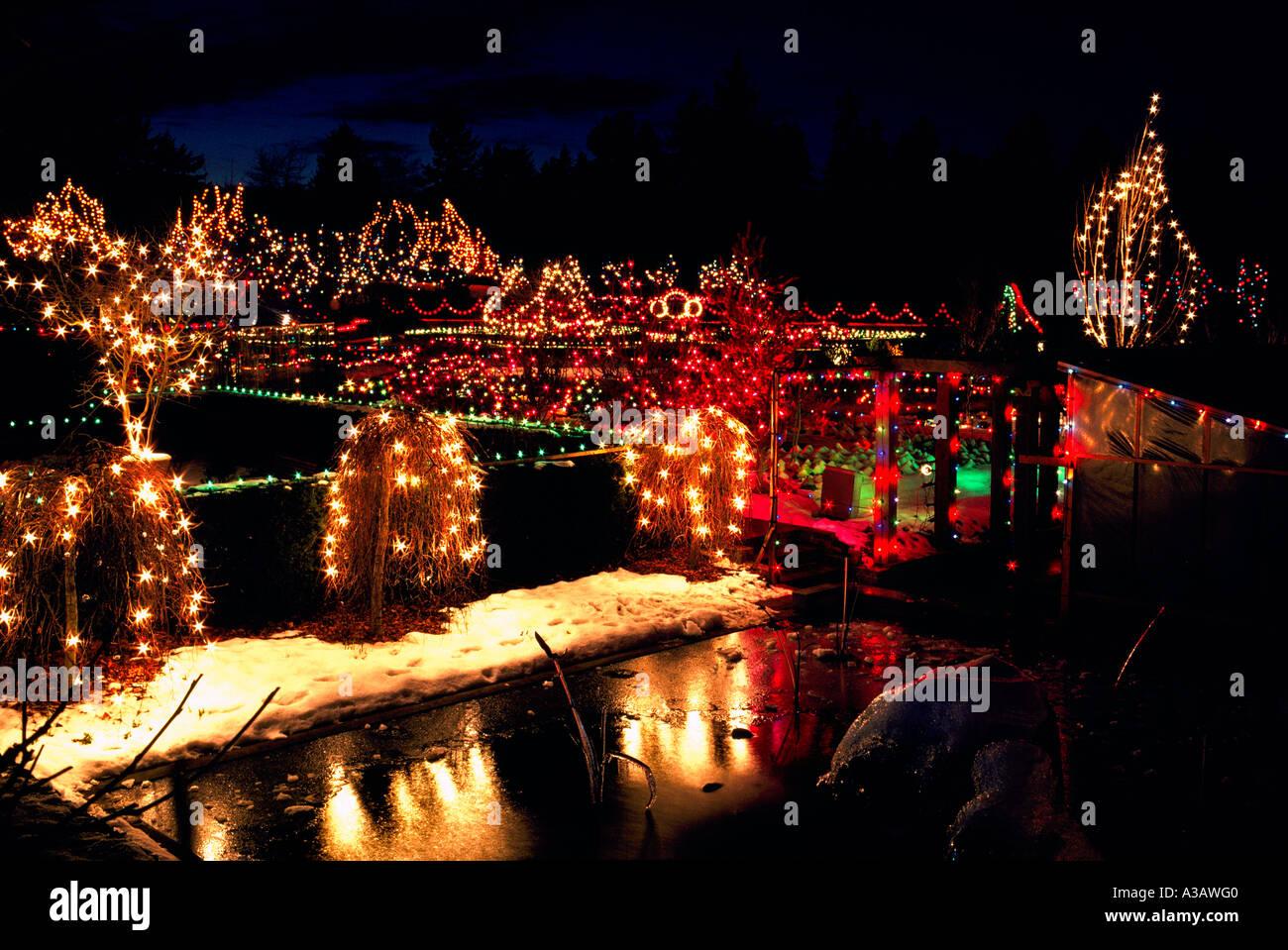 Traditional Christmas Lights.Traditional Christmas Lights On Trees Vandusen Botanical