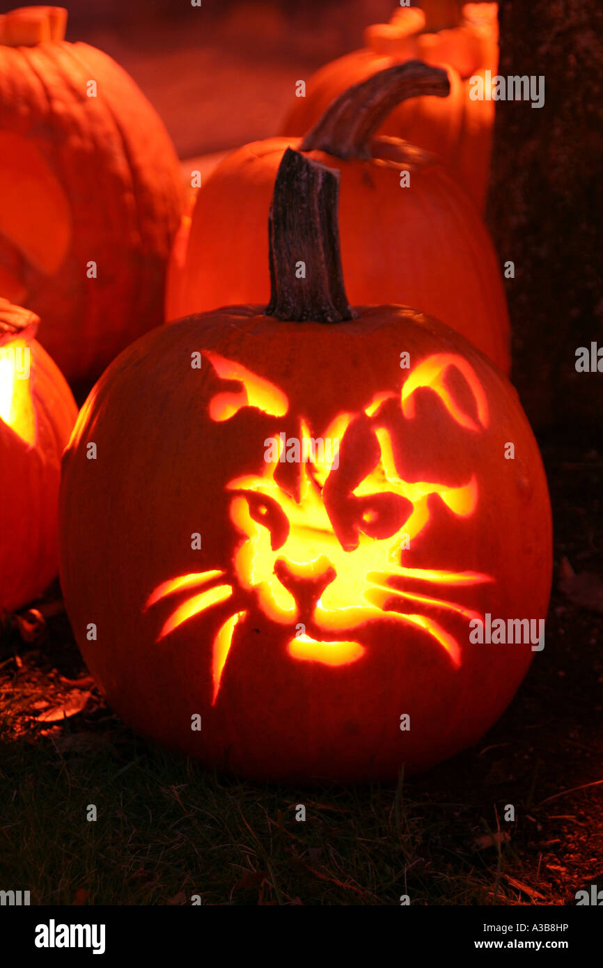 USA New Hampshire Keene Pumpkin Festival. Cat\u0027s face carved in pumpkin skin  with lit candle inside.