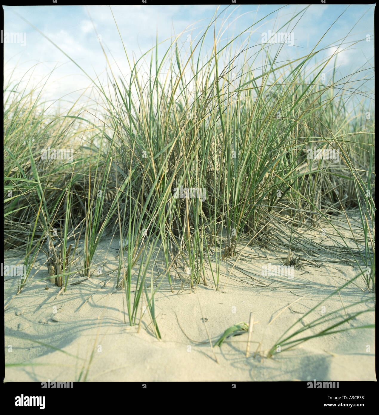 detail of beach showing dunes with grass and a blue sky with a few clouds Cape May in New jersey USA - Stock Image