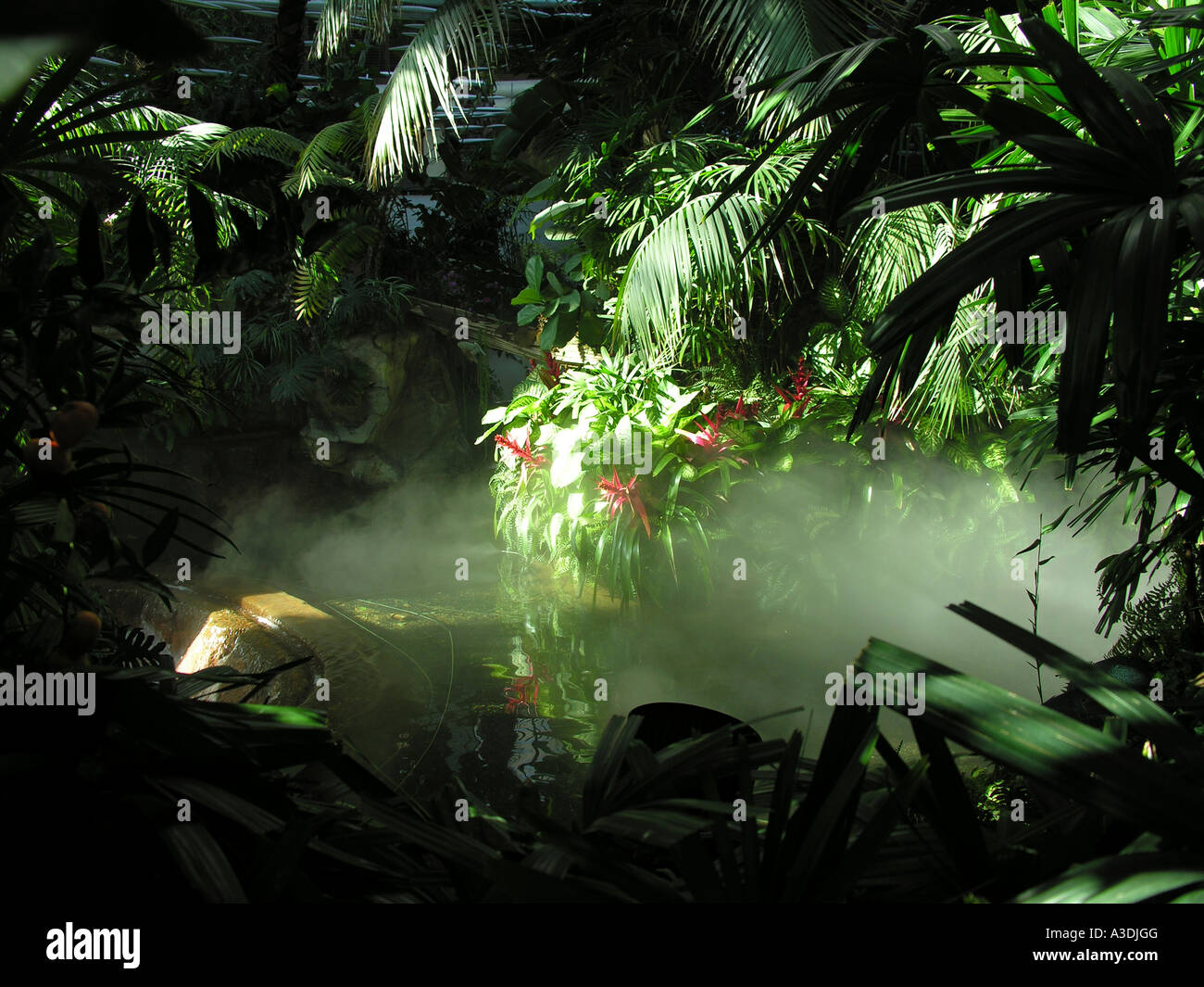 An indoor model rain forest with mist and variety of green foliage big leaves. - Stock Image