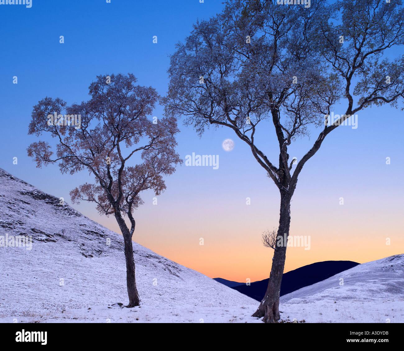 GB - SCOTLAND: Wintertime in Glen Lochsie - Stock Image