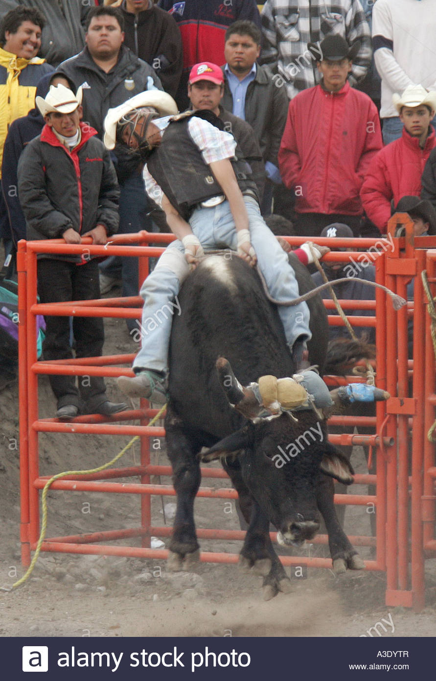 Mexican Rodeo Jaripeo biggest bulls and best riders get