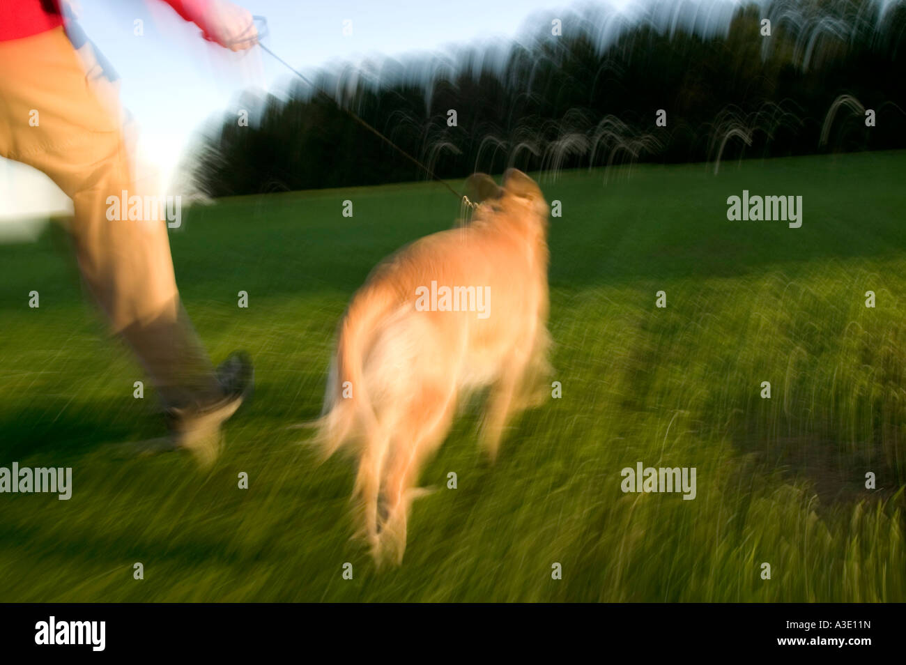Teenage boy running with his Golden Retriever dog in the green grassy fields of a park. - Stock Image