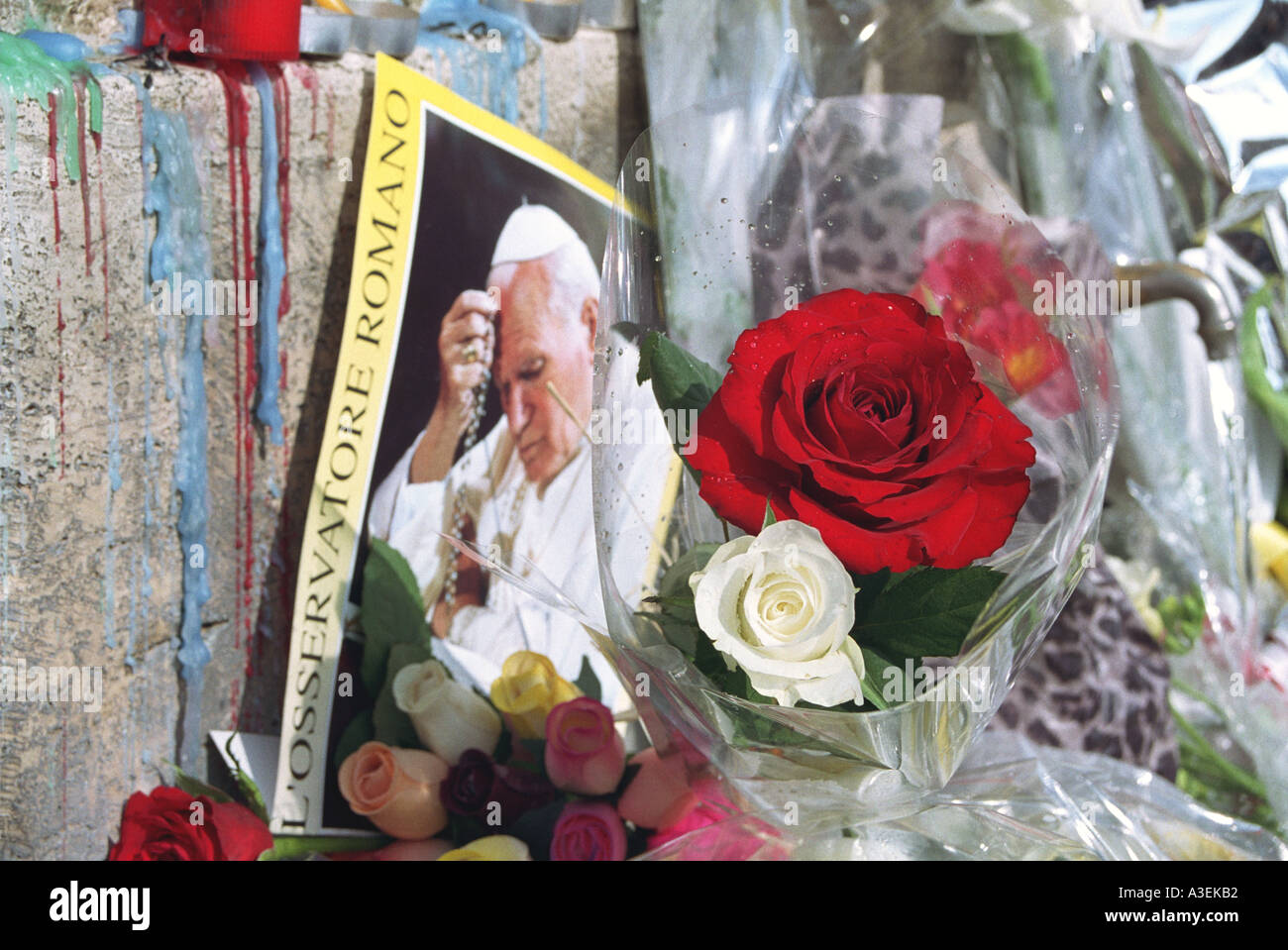 Red and white roses on altar to pope in st peters sq pope s death red and white roses on altar to pope in st peters sq pope s death rome apr 2005 mightylinksfo