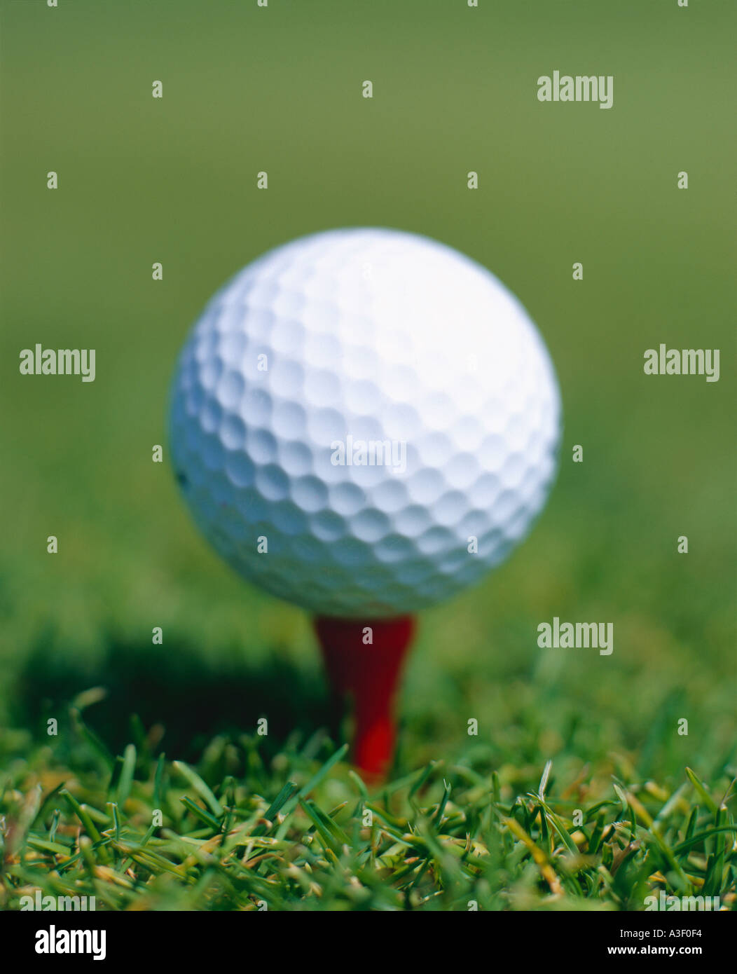 close up of Golf Ball on a tee - Stock Image
