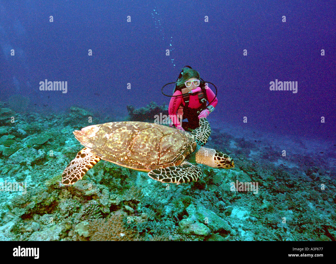 underwater, turtle and diver Stock Photo