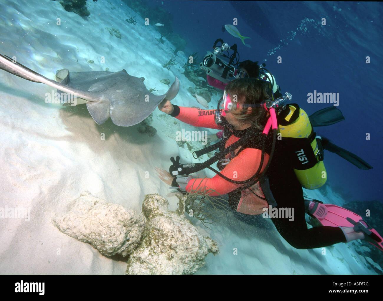 underwater, stingray city, cayman islands, scubadiving, stingrays - Stock Image