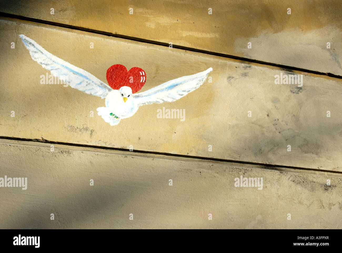 PEACE DOVE - Stock Image