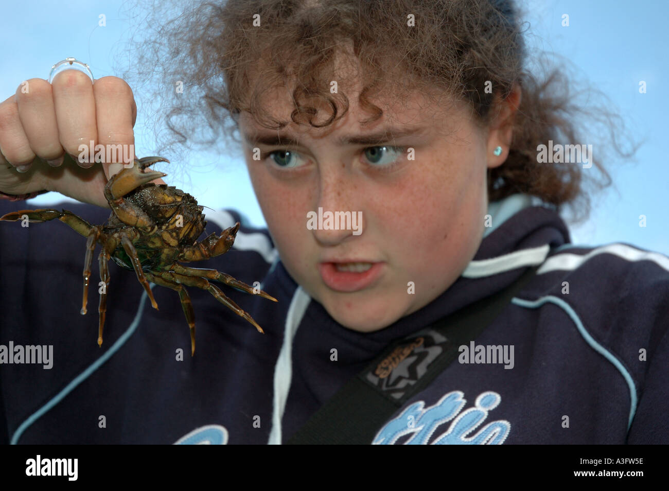 Young girl holding and staring at a crab in Bideford Devon England UK - Stock Image