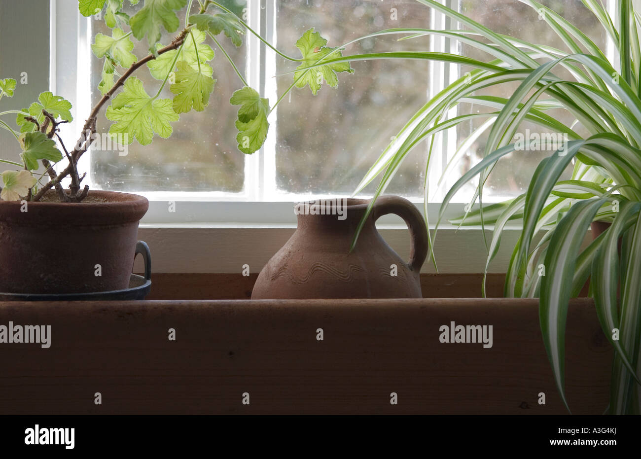 View of indoor plants on a window ledge - Stock Image