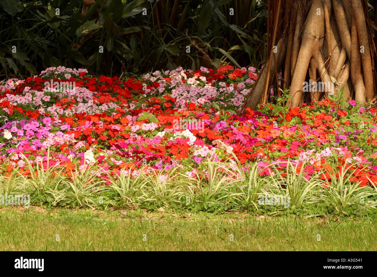 Flowers Shrubs Green Yellow Red Pink Grass Rose Flowering Shrubs