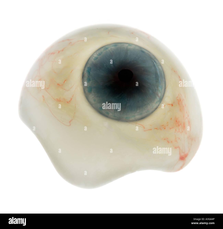 ocular prosthetic  artificial eye  glass eye  glasseye CUTOUT cut out Stock Photo