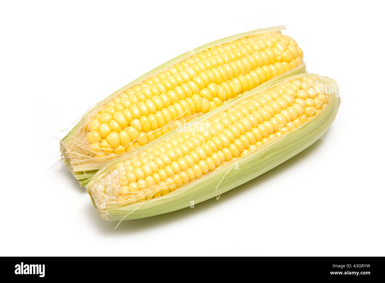 Corn on the cob isolated on a white studio background. - Stock Image
