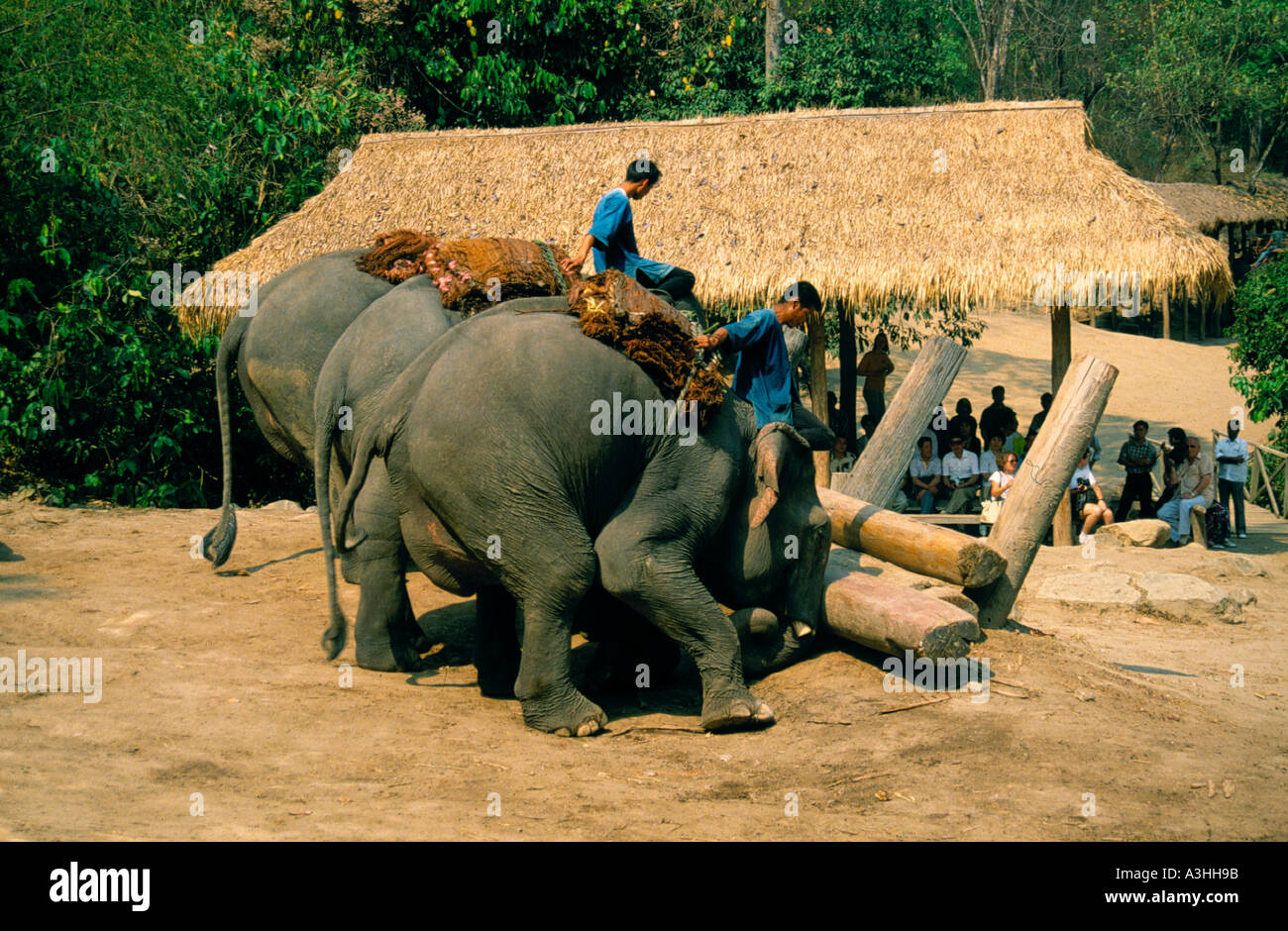 chiang dao elephant camp near city of chiang mai thailand editorial use only Stock Photo