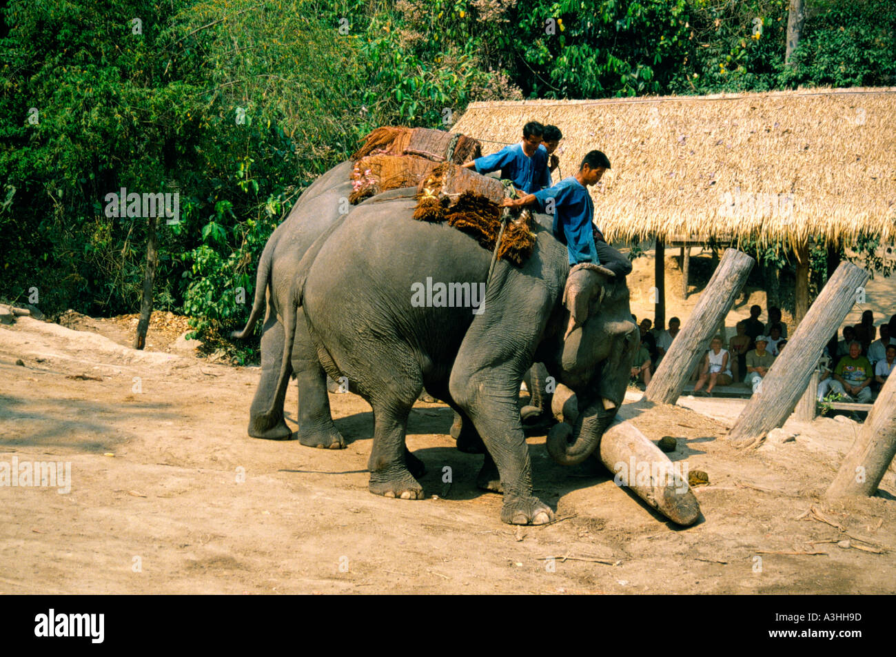 chiang dao elephant camp near city of chiang mai thailand - Stock Image