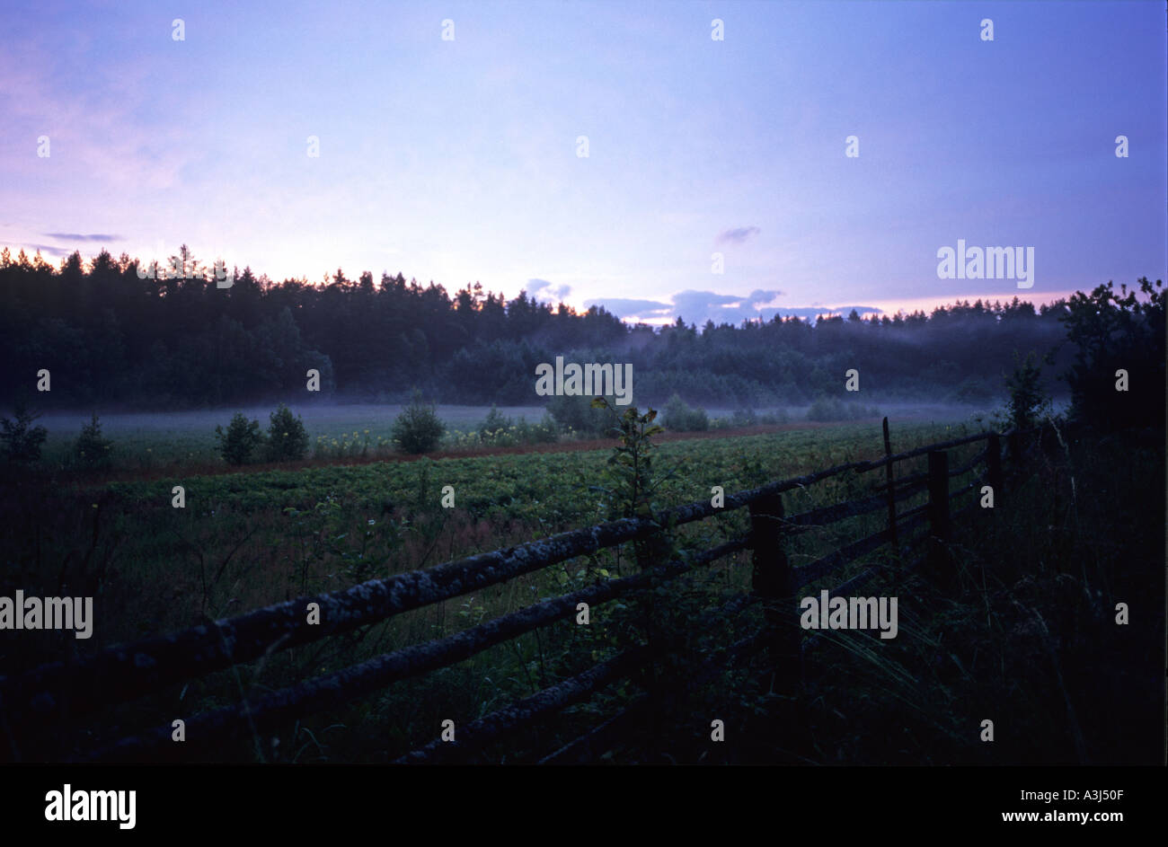 Poland Europe Bialowieski wilderness fogs in the forest - Stock Image