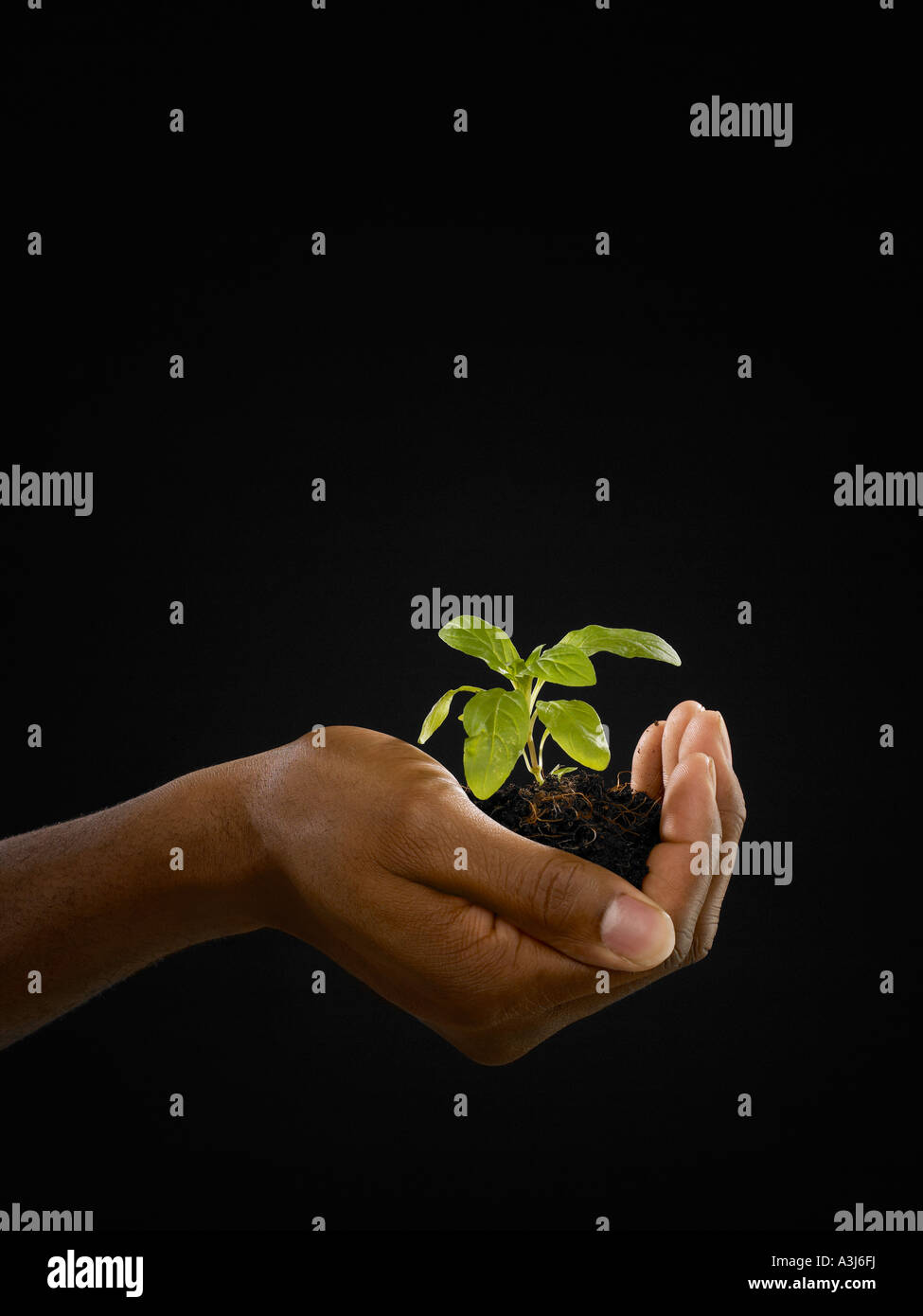 Person holding a seedling - Stock Image