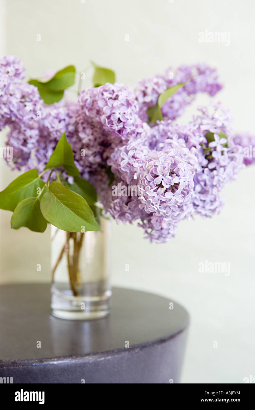 Lilac - Stock Image