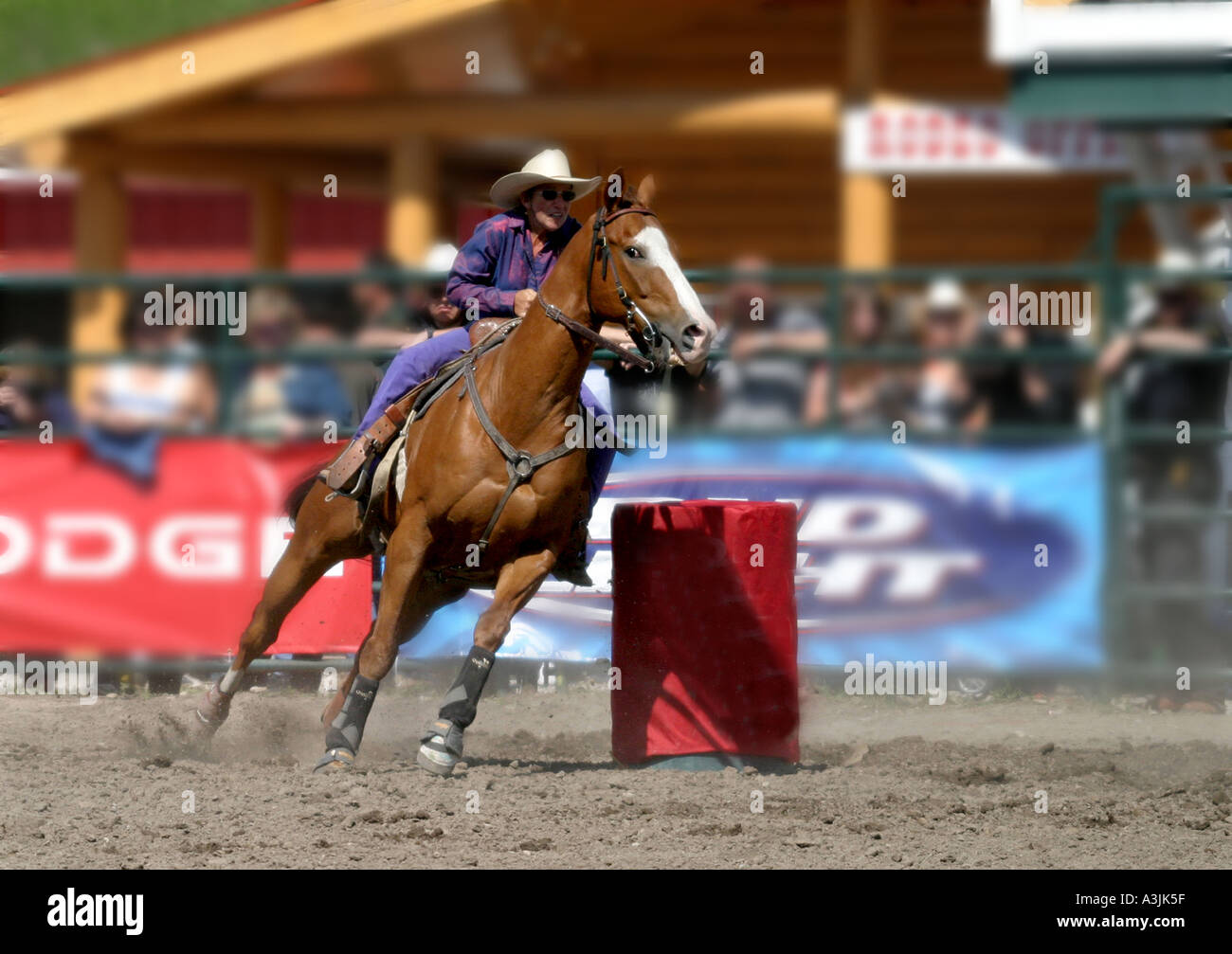 Calgary Stampede Cowboy Cowgirl Stock Photos Amp Calgary