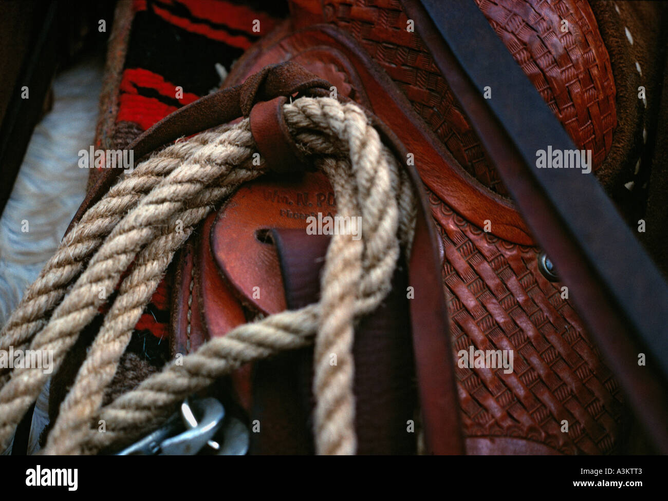 Close up of saddle and lasso - Stock Image