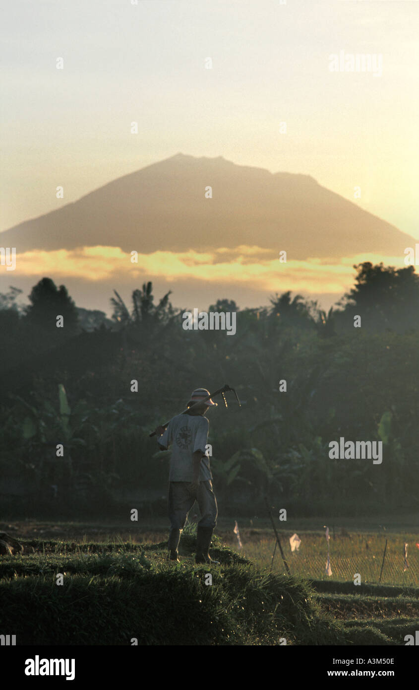 Gunung Batukau Central Bali Indonesia Viewed from Ubud at dawn Balinese man attending to his crop - Stock Image