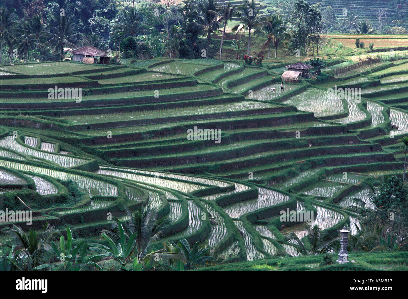 The rice bowl of Jatiluwih viewed from the lower slopes of Mount Gunung Batukaru Bali Indonesia - Stock Image