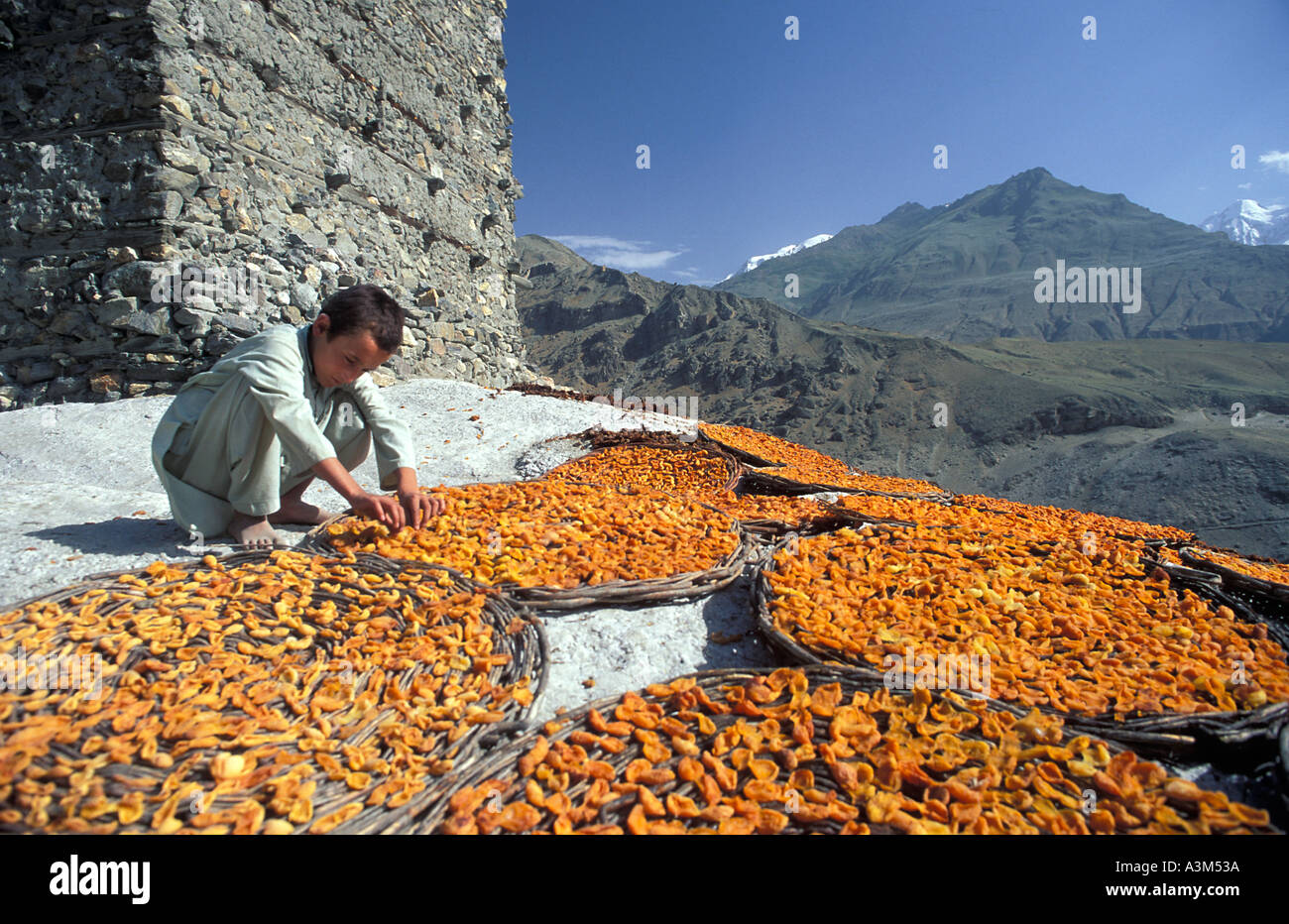 Sunbaked Apricots Apricots laid out in flat baskets to dry in the baking Himalayan sun - Stock Image