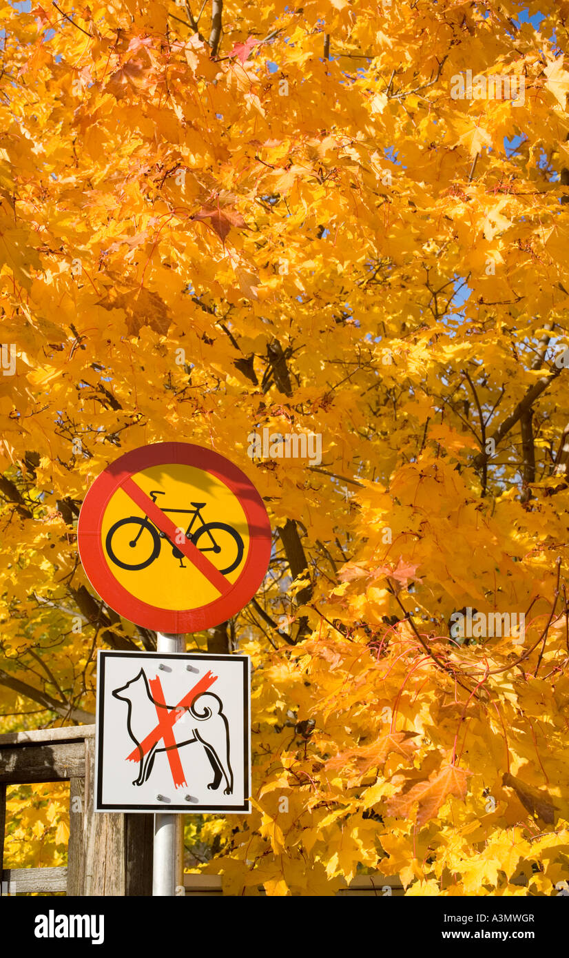 Colourful yellow maple (acer) tree leaves.  Finnish traffic sign number 322. ( No entry for cycles or mopeds ) also - Stock Image