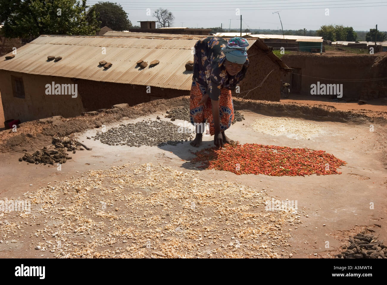Village woman Larabanga Ghana drying seeds and grain on roof of house - Stock Image