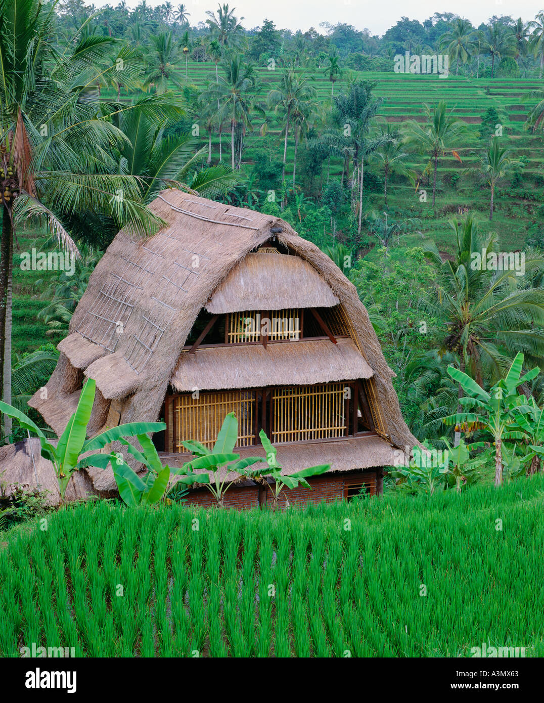 A Rice Barn Stands Among Terraced Rice Fields Tegalalang Near Ubud