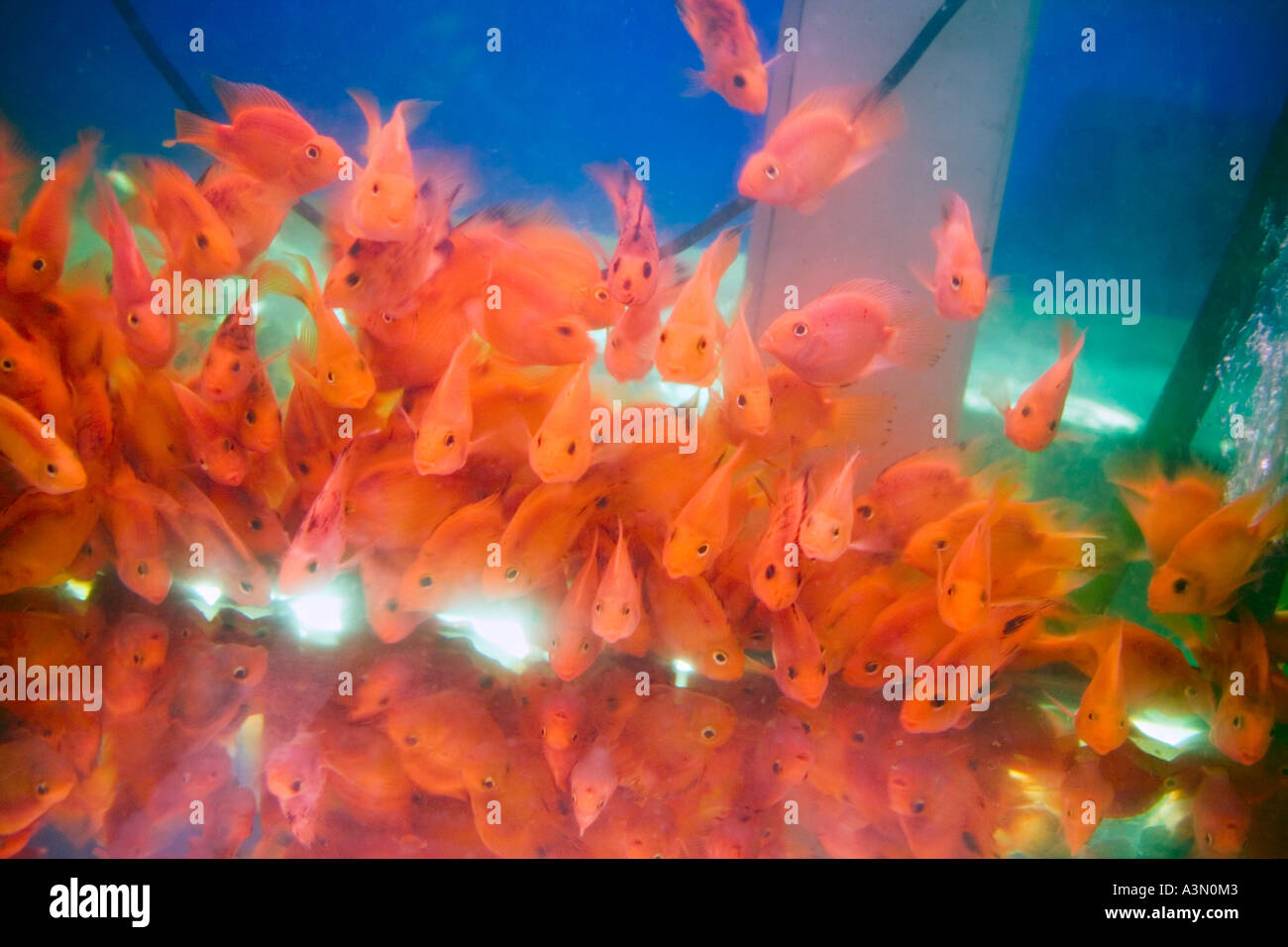 Brightly Colored Fish In Tropical Stock Photos & Brightly Colored ...