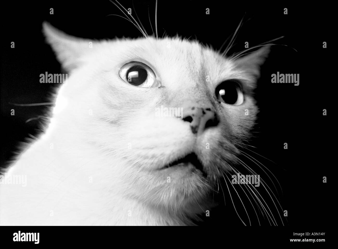 A mad cat thinking about something - Stock Image