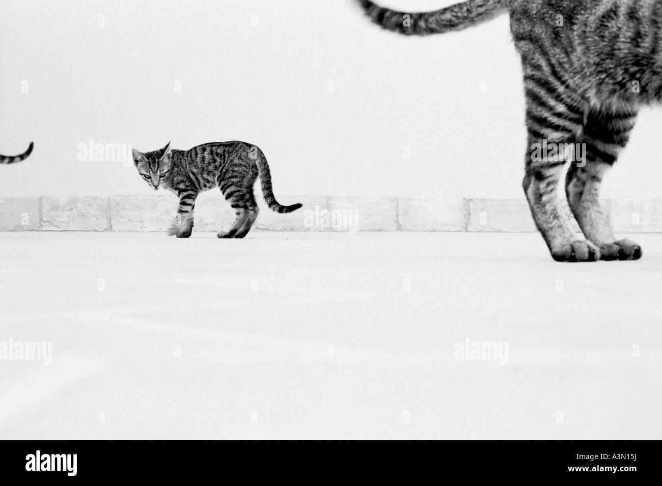 Still cat tails - Stock Image