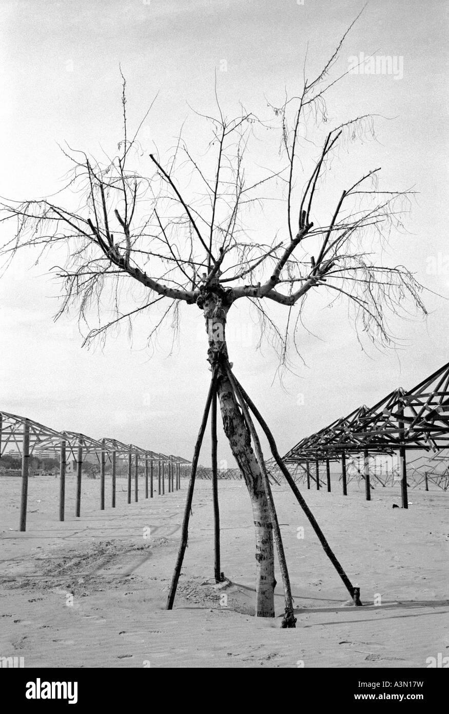 Italy. A tree on the beach - Stock Image