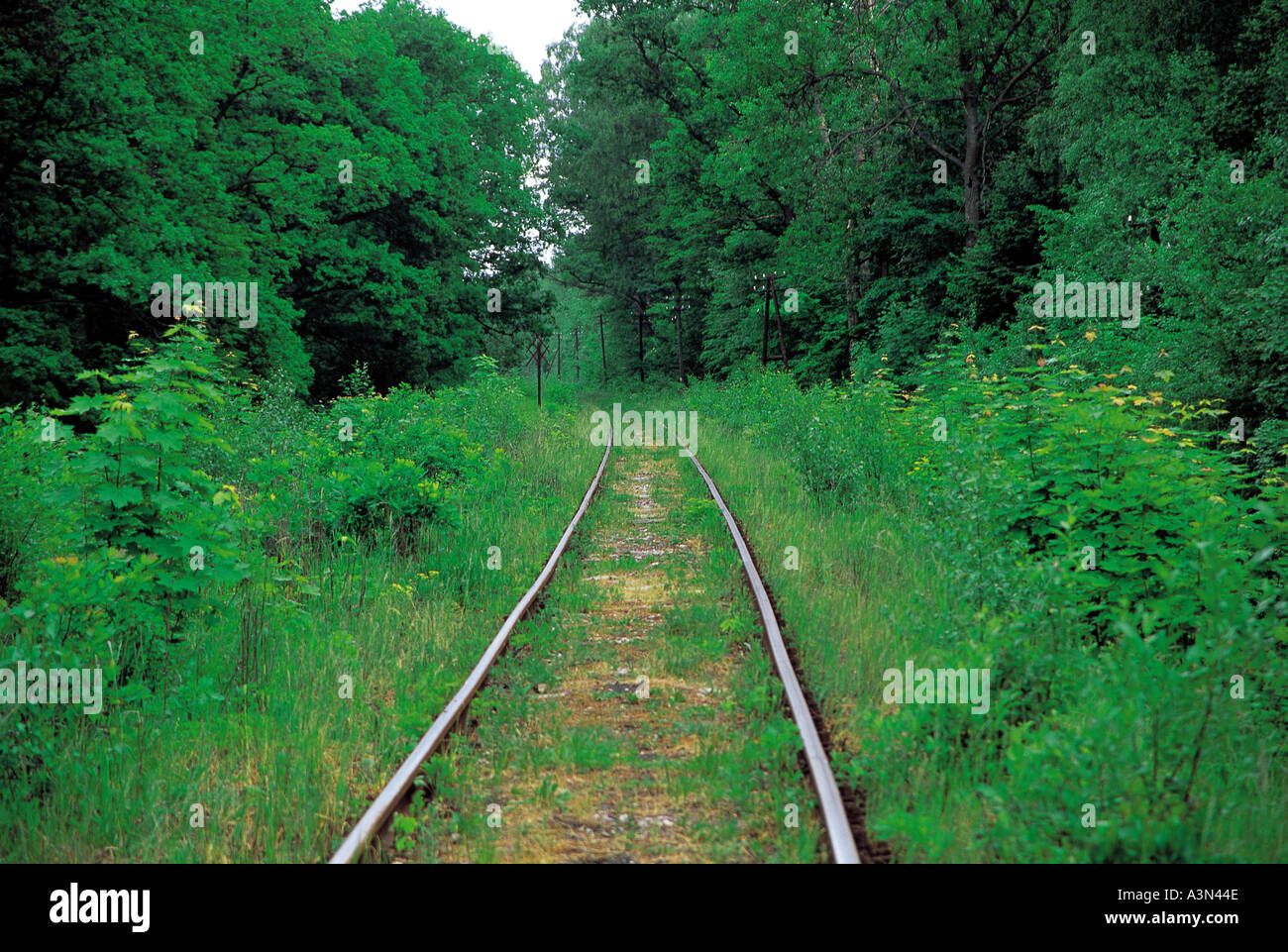 Trees Traintracks Forests - Stock Image