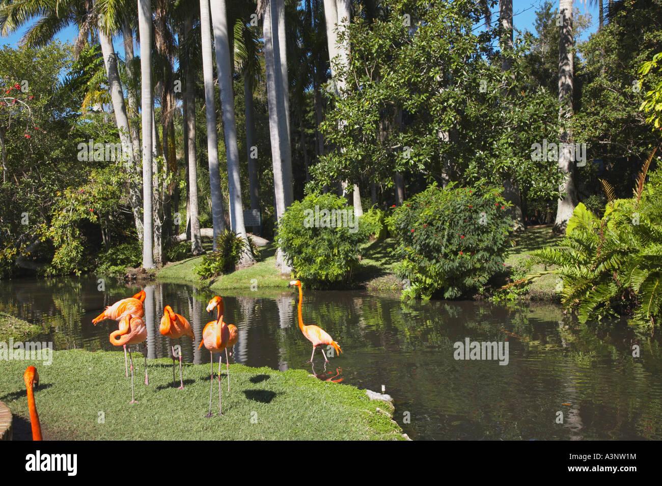 Florida Sarasota Jungle Gardens Flamingos Stock Photos Florida Sarasota Jungle Gardens