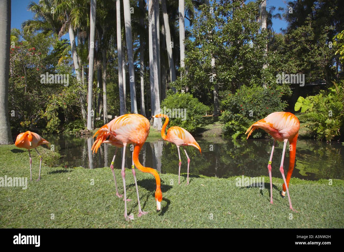 Jungle Gardens Sarasota Fl Garden Ftempo