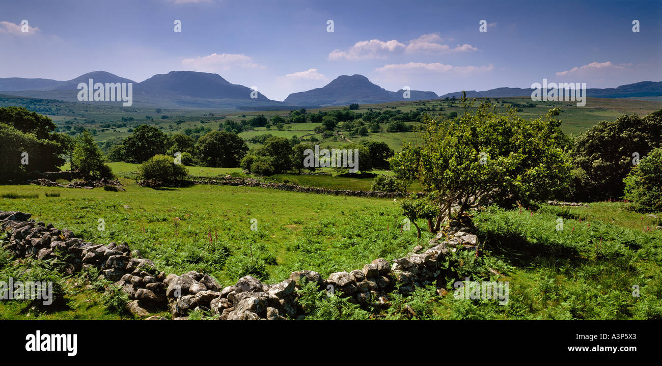 THE RHINOG FAWR MOUNTAINS FROM THE A470 SUMMER SNOWDONIA NORTH WALES UK - Stock Image