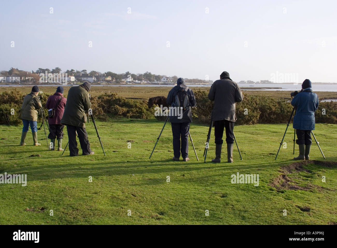Bird Watchers at Stanpit Nature Reserve, Christchurch Harbour/Harbor, Dorset, UK - Stock Image
