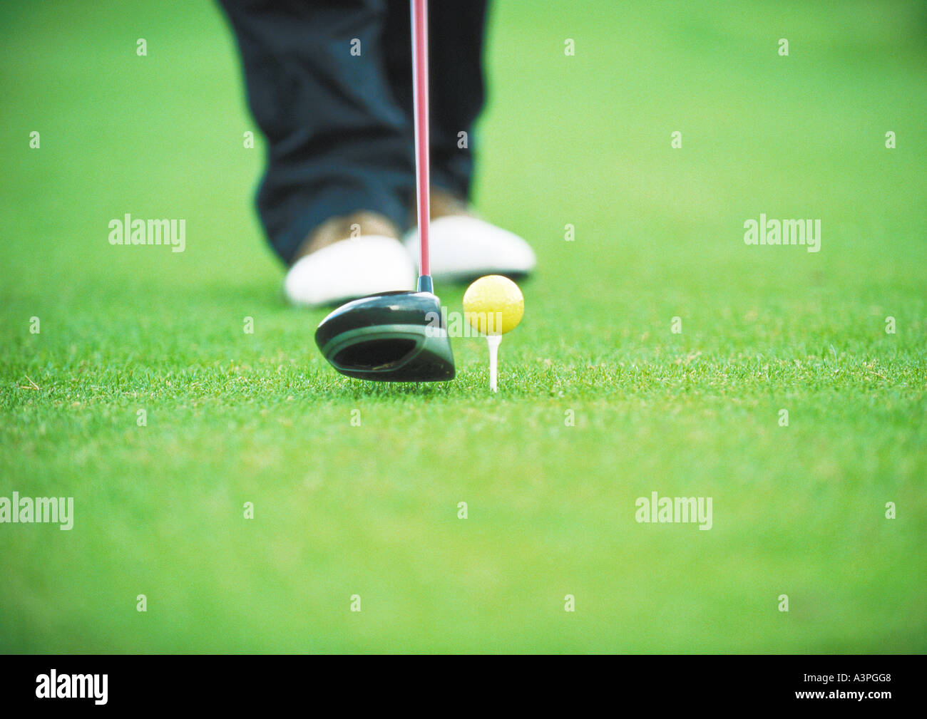Golfer preparing to tee off, low section - Stock Image