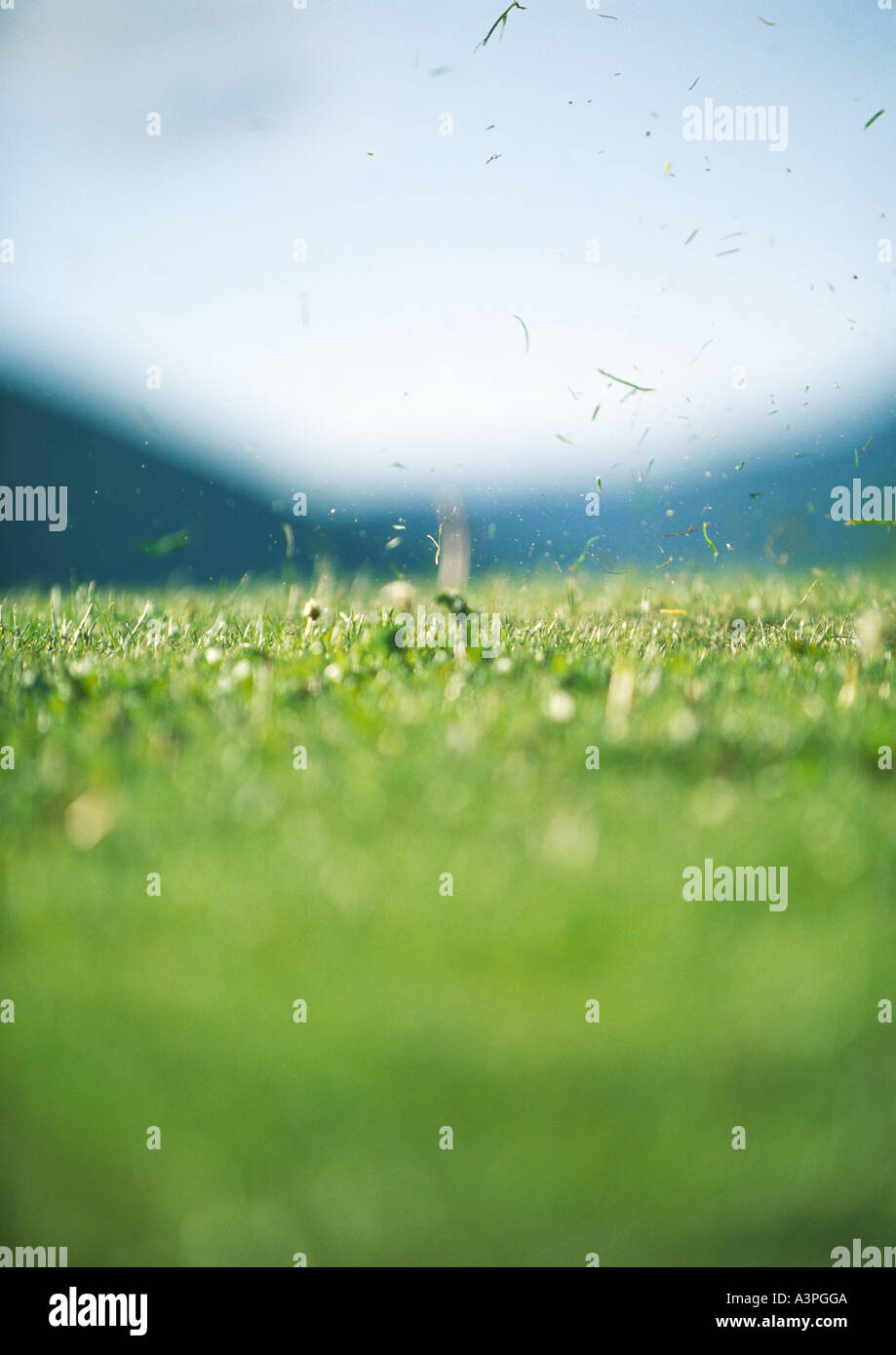 Grass flying in air after tee-off - Stock Image